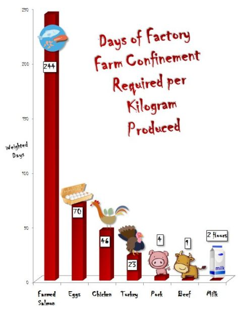 How Much Direct Suffering Is Caused by Various Animal Foods?